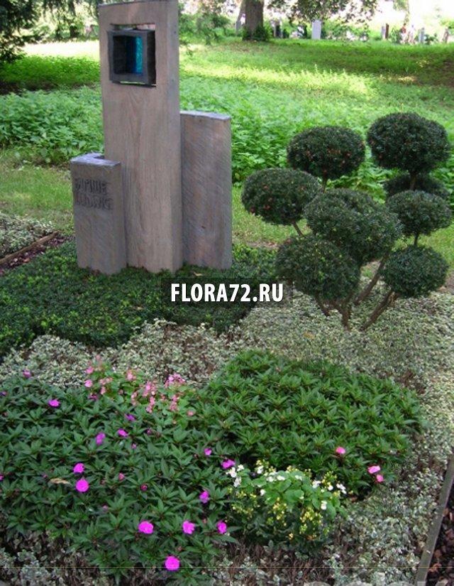 Растения которые сажают на кладбище 228