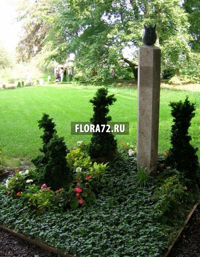 Растения которые сажают на кладбище 639